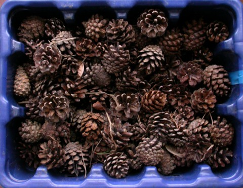 £50 worth of pine cones, at Wilkinson's rates
